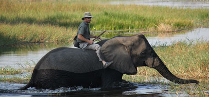 Nathan Jamieson with elephant